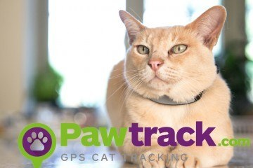 Pawtrack GPS Cat Tracking Collar Finds Your Pet