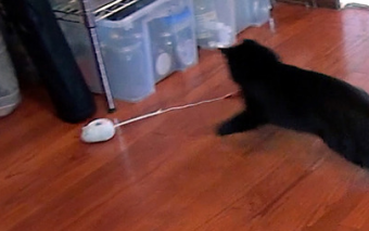 Mousr Robotic Mouse Plays with Your Cat