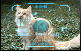 petTracer GPS Cat Collar w/ Real-time Tracking